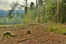 Cutting Down Trees In The Forests
