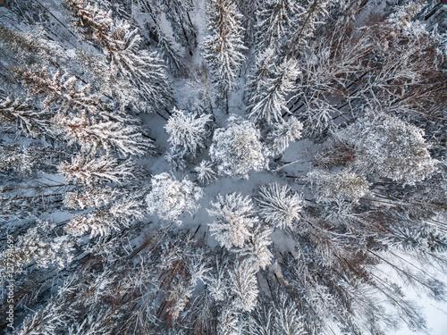 sniezny-zimowy-las-z-widokiem-z-lotu-ptaka