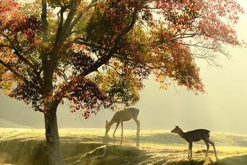 Fototapeta Drzewa 奈良の鹿