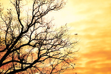 Black Silhouettes Of Tree Branches Against The Backdrop Of Sunset, Dawn Bright Red, Yellow Sky. Plenty Of Room For Your Texts And Ideas.