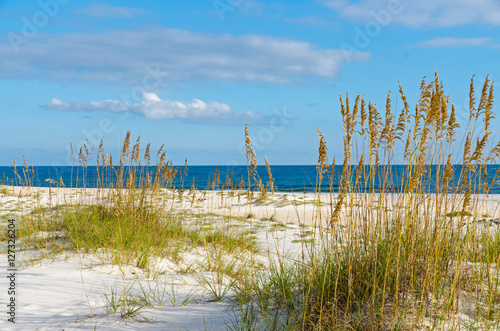 Gulf Coast Scenery Wallpaper Mural