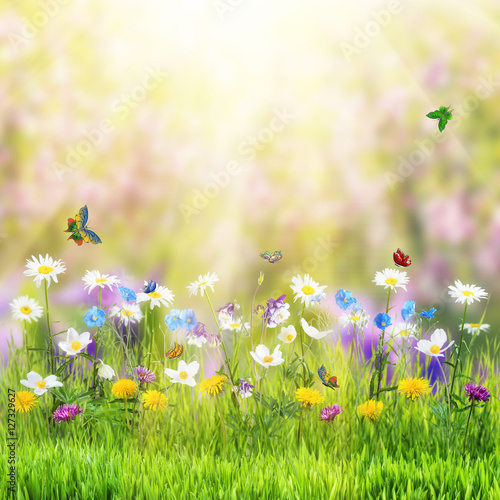 Spoed Foto op Canvas Natuur Floral meadow and butterfly