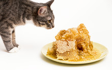 Fresh Honey In The Comb With Cat Close-up Isolated On White Background.