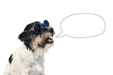 Funny Dog With Empty Speech Bubble