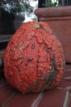 Large Orange Gourd On A Front Steps