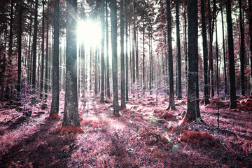 Panel Szklany Podświetlane Do sypialni Artistic strange unusual sunny forest trees landscape background. Pink red color tone used.