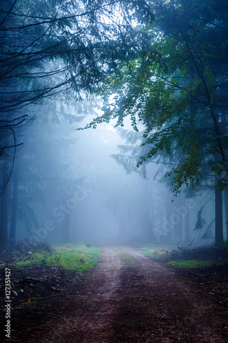 Papiers peints Forets Misty Forest in Autumn Time