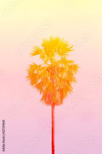 Photo  Palm trees on an orange background.