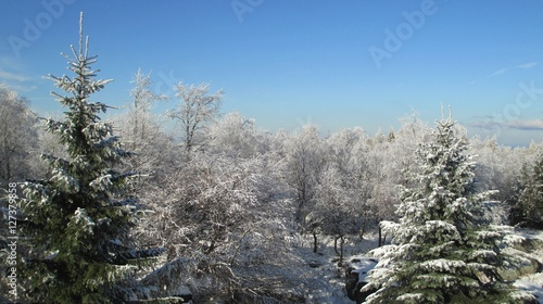 Fotografie, Obraz  Winter forest