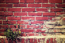 Red Brown Brick Wall With Dandelion Plant Grow Up On A Corner, V