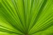 Leinwanddruck Bild - Palmenblatt - Nahaufnahme
