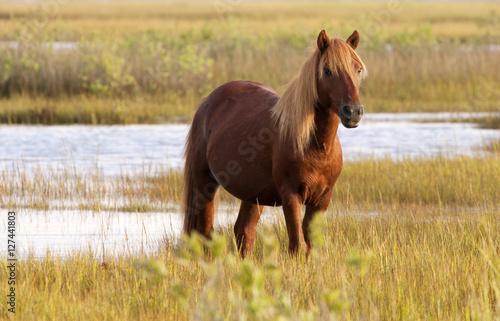 Photo  Guardian Stallion