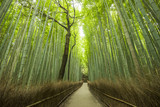 Fototapeta Na drzwi - Path of Bamboo, Arashiyama, Kyoto, Japan