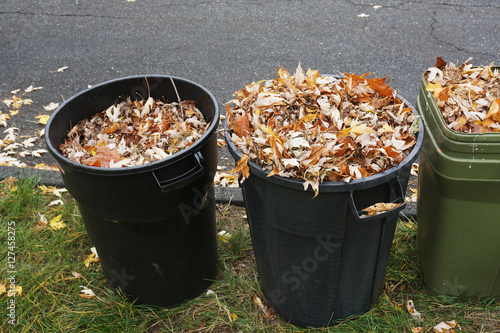 Fotografia, Obraz  curbside yard waste collection, fallen tree leaves in trash bin in autumn season