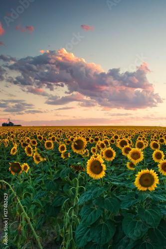 Fototapeta Sunflower Clouds obraz na płótnie