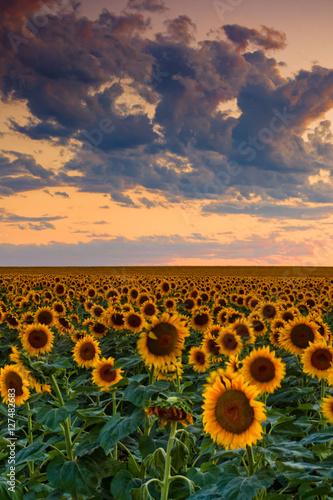Fototapeta The Hues Of A Summer Sky obraz na płótnie