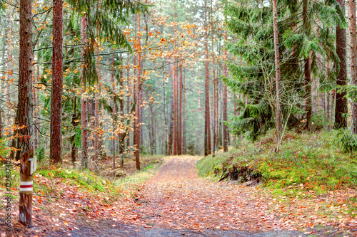 Fotografija  Path in the forest. Autumn season.