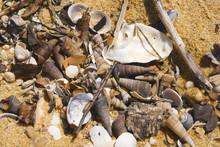 Shells Washed Up On A Beach