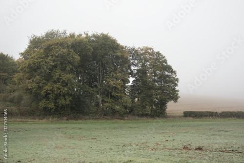 Fotobehang Olijf Foggy misty Autumn morning landscape in British countryside