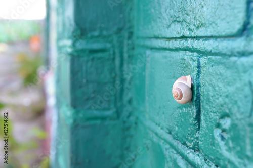 Schnecke klebt auf türkis-grüner Graffiti-Wand