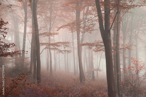 Poster Cappuccino Stunning colorful vibrant evocative Autumn Fall foggy forest lan