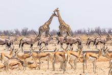 Wild Animals Pyramid With Gira...