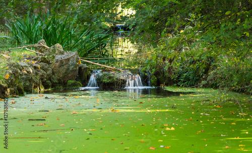 Fényképezés  Duckweed on the surface water