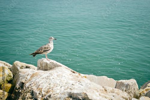 Seagull on rocks, sea ocean coast background Poster