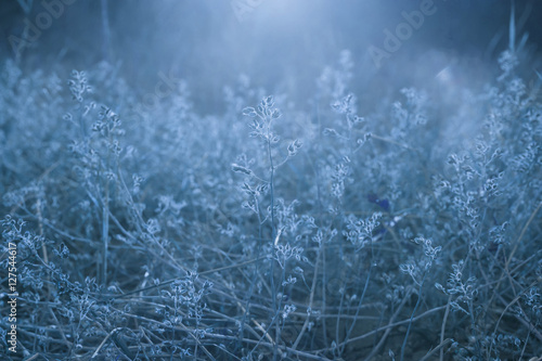 Dry plants on blue