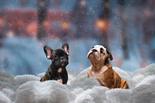 Two Dogs Sitting In The Snow Surrounded By Snow