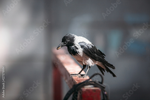 Photo  raven holding a coin