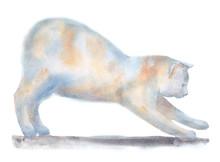 Sketch With White Kitten In Pr...