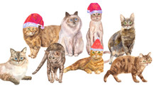 Collection Of Christmas Cats: White, Brown And Red Cats With Hats Santa, With Green And Blue Eyes, Lying And Standing On White Background, Watercolor Painting, Animal Illustration, Concept