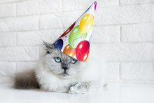 Funny Cat In A Birthday Hat In...