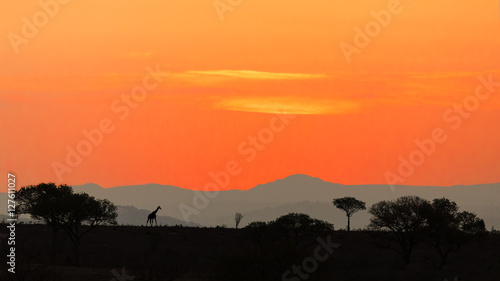 Sunset over the savannah