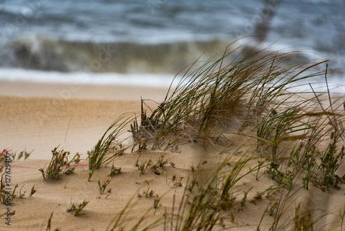 Fényképezés  Winds blowing over grass on beach