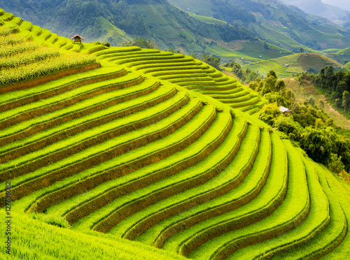 Autocollant pour porte Les champs de riz Terraced rice field in the mountains of Mu Cang Chai, Yen Bai Province, northern Vietnam