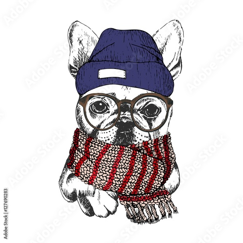 Fotobehang Art Studio Vector hand drawn portrait of cozy winter dog. French bulldog wearing knitted scarf, beanie and hipster glasses.