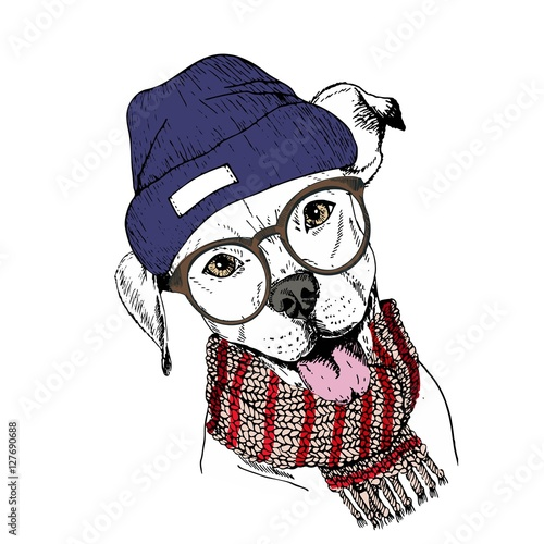Fotobehang Art Studio Vector hand drawn portrait of cozy winter dog. Pit bull wearing knitted scarf, beanie and hipster glasses.
