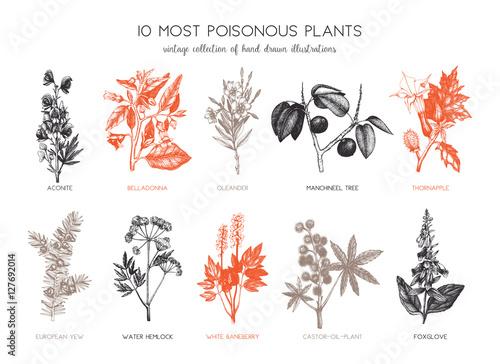 Vector collection of most poisonous plants Canvas Print