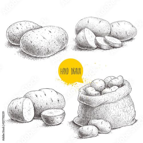 Hand drawn sketch style set illustration of ripe potatoes Fototapeta