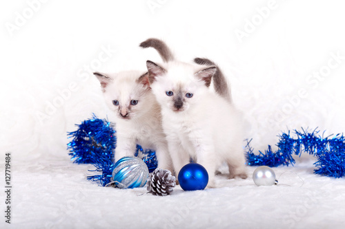 Fotografie, Tablou  Siamese kittens with Christmas balls