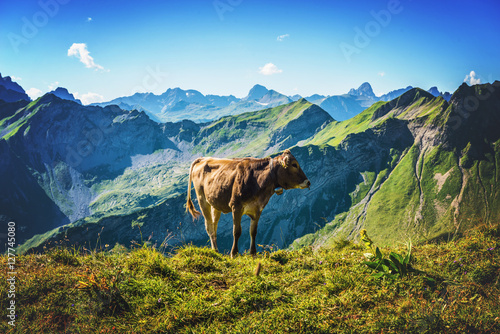 Fotografie, Obraz  Single brown cow in an pasture on Grosser Daumen