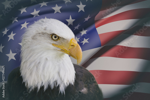 Poster Eagle a beautiful bald eagle with a background of a usa flag