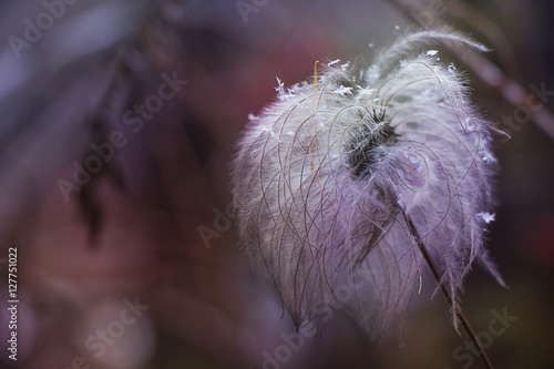 dry fluffy flower with snowflakes