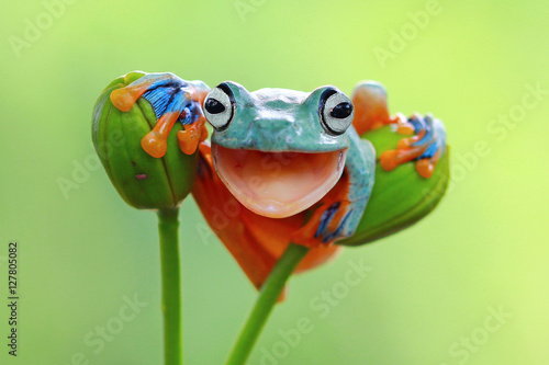 Papiers peints Grenouille Tree frog smile