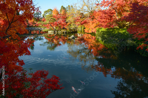 Fotografie, Obraz  Beautiful Japanese pond garden with autumn maple tree reflections and colorful f