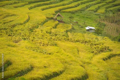 Gold Terraced Rice Field, Pa Pong Pieng , Mae Chaem, Chiang Mai, Thailand