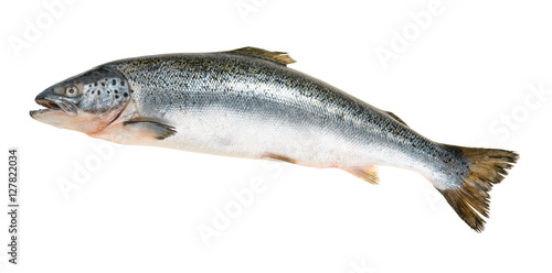 Fotobehang Vis Salmon fish isolated on white without shadow