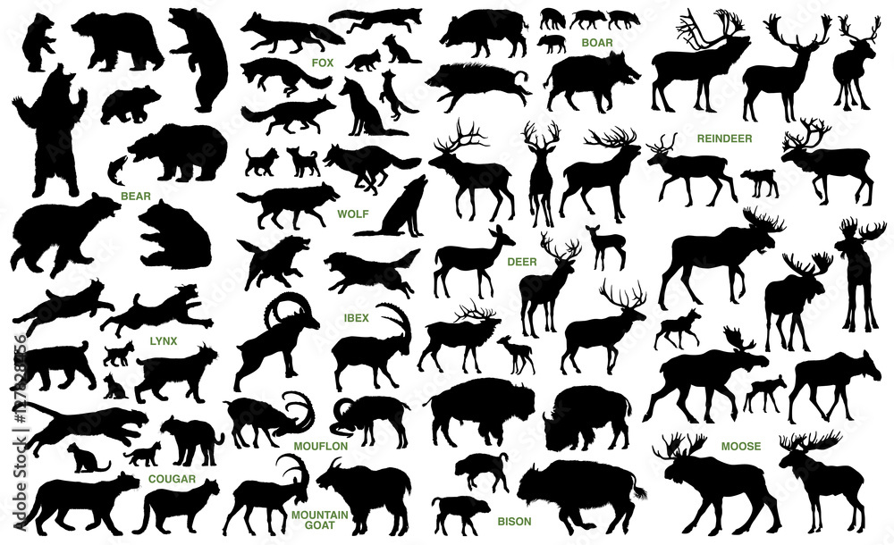Fototapeta Big mammals of the northern lands vector silhouettes collection